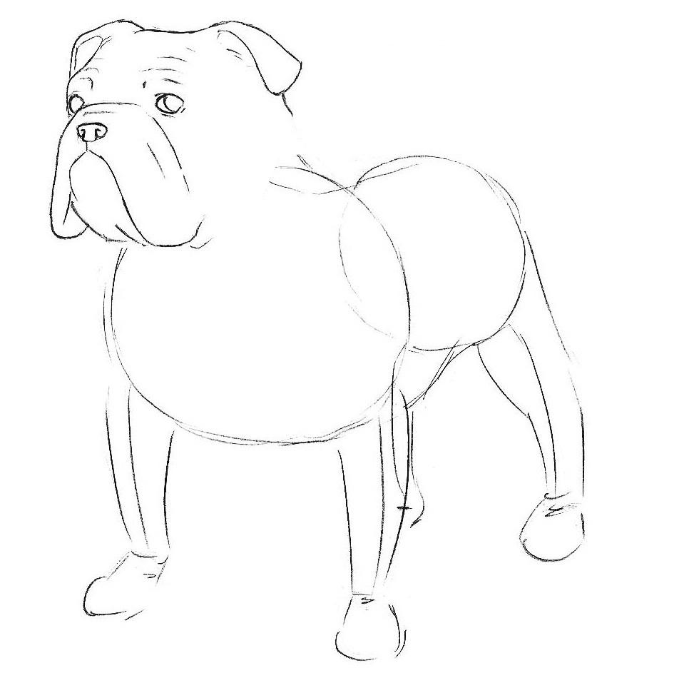 3-learn-to-draw-a-bulldog-step-by-step.jpg