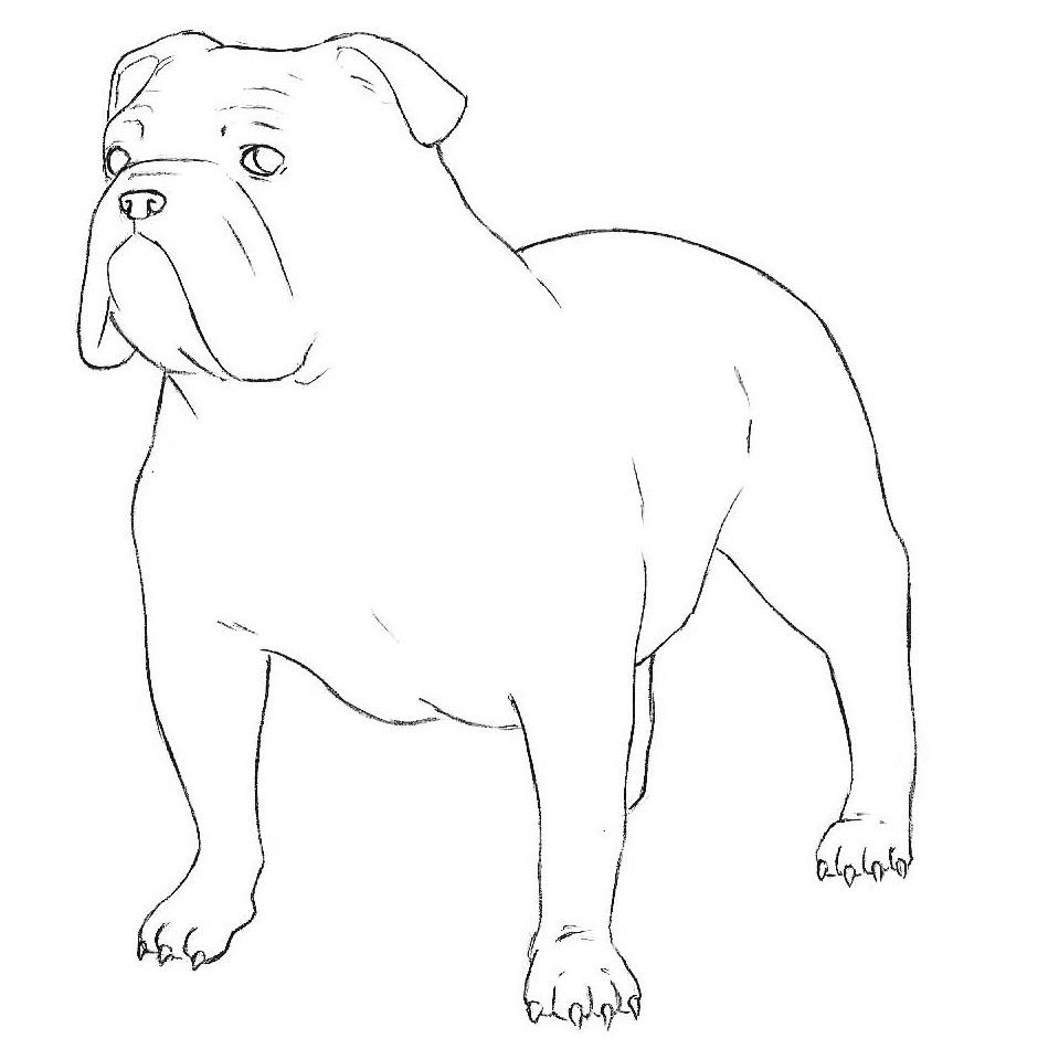 5-bulldog-drawing.jpg